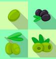 fresh olives icon set flat style vector image vector image