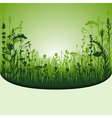 herbal vector image vector image