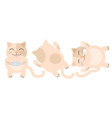 orange fat cat has a dot on face he was glad vector image vector image