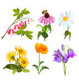 set of echinacea bleeding heart flowers arnica vector image vector image