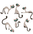 siamese elegant cats design set vector image