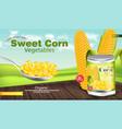 sweet corn realistic metal tin product vector image