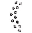 cat paw print track vector image vector image