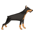 Doberman eps10 vector image