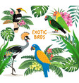 exotic birds set crowned crane colorful parrots vector image