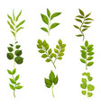 flat set of branches with green leaves vector image