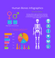 human bones infographics colorful poster vector image