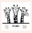 peeking giraffes - funny giraffes out vector image vector image