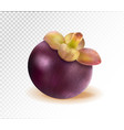 ripe mangosteen isolated on transparent background vector image vector image