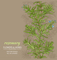 rosemary background vector image
