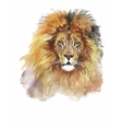 Watercolor lion on a white background vector image