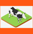 cow isolated vector image vector image