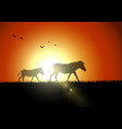 horse silhouette at savanah in sunset vector image vector image