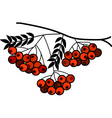 berries on branch vector image