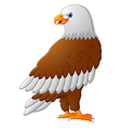 Cartoon eagle posing vector image vector image