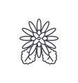 chrysantemum line icon concept chrysantemum flat vector image