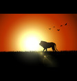 silhouette lion in sunset at savanah vector image vector image