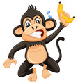an angry monky on white background vector image