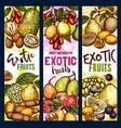 exotic fruit and berry sweet food vector image vector image