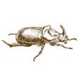engraving drawing of rhinoceros beetle vector image vector image