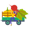 harvesting on farm truck with beetroot veggies vector image vector image
