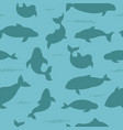 marine mammals collection different porpoises set vector image vector image