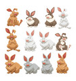 rabbits with different fur colors vector image