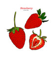 set strawberry hand drawn vector image