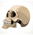 Skull isolated on a white background vector image