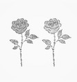 two roses from different decorative ornate vector image