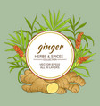 ginger frame vector image vector image