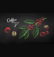 sketches set of coffee branch and berries vector image vector image