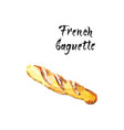 watercolor of french baguette vector image