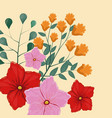 beautiful flowers spring season vector image