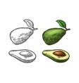 half avocado with seed vintage engraving vector image vector image