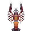 Bright crawfish zodiac Cancer sign vector image vector image