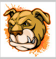 bulldog mascot cartoon head vector image