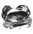 edible crab vintage vector image vector image