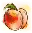 Peach watercolor painting vector image vector image