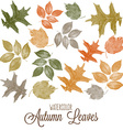 Set of watercolor colorful autumn leaves vector image