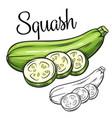 squash drawing icon vector image
