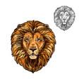 lion muzzle african wild animal sketch icon vector image