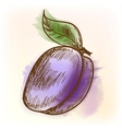 Plum watercolor painting vector image