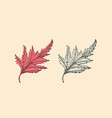 autumn leaves or herb rustic decorative plant vector image