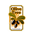 black olives icon template for olive oil vector image vector image
