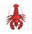boiled lobster red on a white background vector image