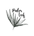 coconut palm or queen palmae with leaves poster vector image vector image