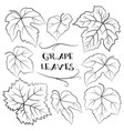 Grapes leaves black pictograms vector image