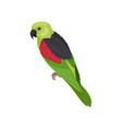 lory parrot with bright feathers australian bird vector image vector image