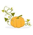 ripe pumpkin with swirly leafy stem vector image